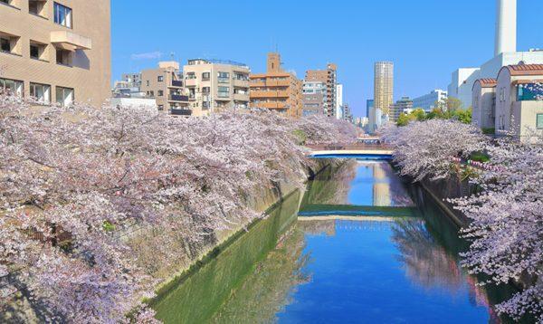 東京都目黒区の不用品回収/即日対応の格安業者/口コミ高評価