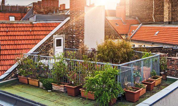 屋上・庭の植木・観葉植物の処分