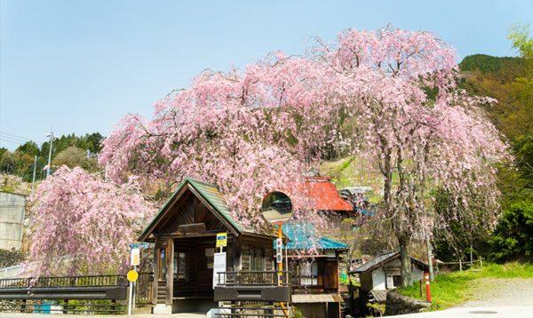東京都西多摩郡檜原村の不用品回収/即日対応の格安業者