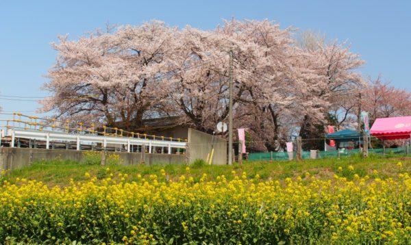 埼玉県北本市の粗大ゴミの出し方/粗大ゴミ回収で早く安く処分する方法