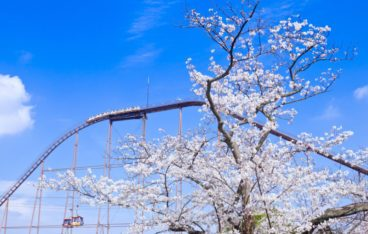 東京都稲城市のおすすめ片づけ代行業者ランキング|料金相場と安く利用するコツ